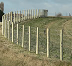 Stock Fences